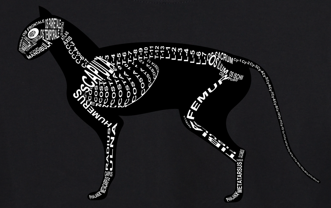 Cat Skeleton: Every cat bone in its medical, Latin name. For a veterinarian and vet student - Word Anatomy