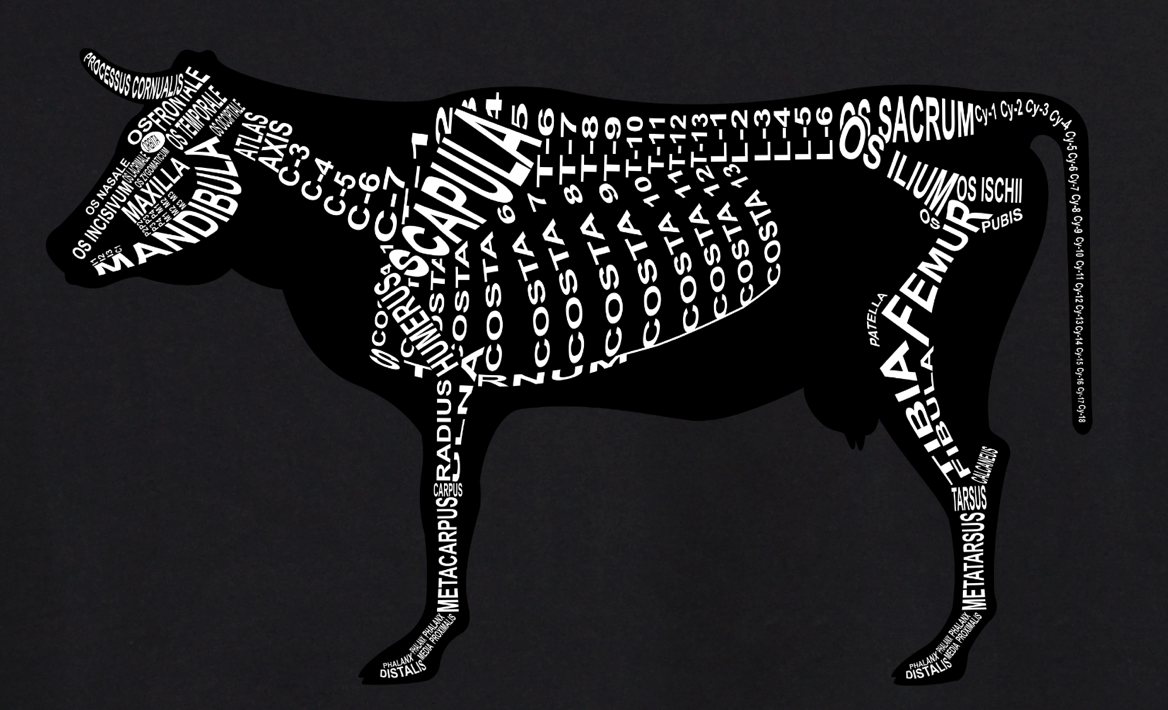 Cattle Skeleton: Every cow bone in its medical, Latin name. For a veterinarian and vet student - Word Anatomy