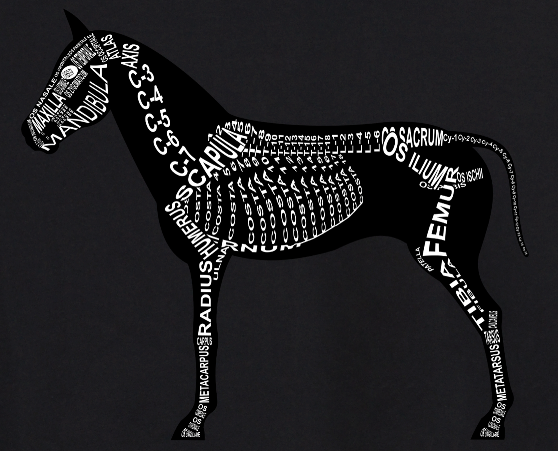 Horse Skeleton: Every horse bone in its medical, Latin name. For a veterinarian, equestrian and vet student - Word Anatomy
