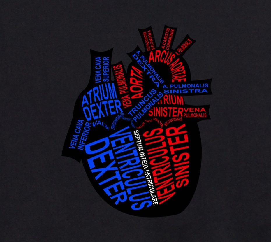 Human Heart: Every component is shown in its medical, Latin name. For a doctor and medical student - Word Anatomy