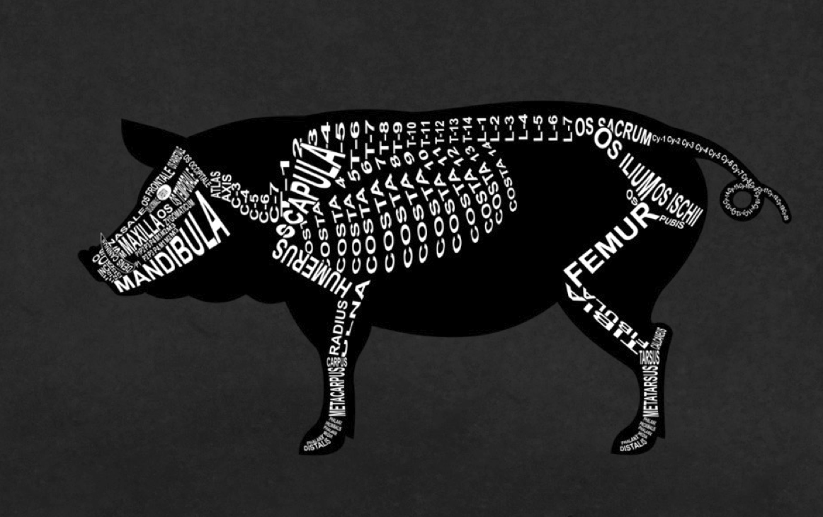 Pig Skeleton: Every pig bone in its medical, Latin name. For a veterinarian and vet student - Word Anatomy