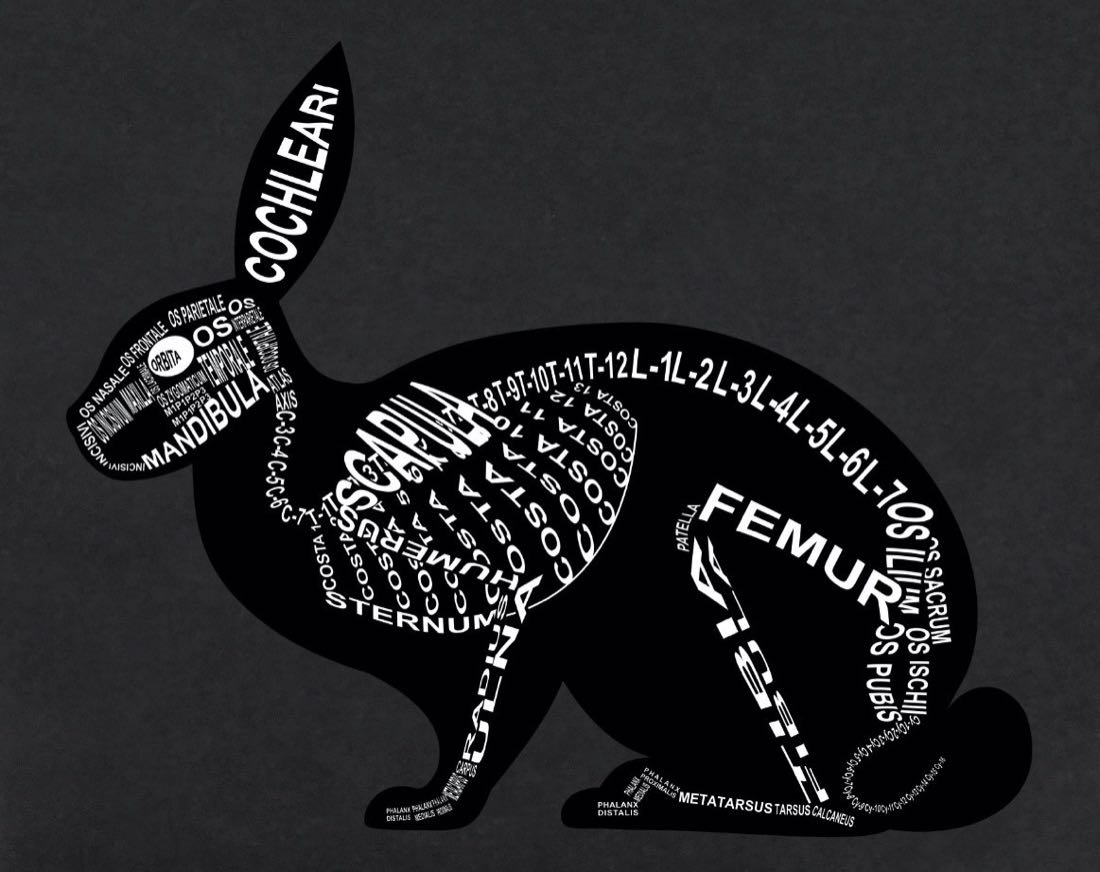 Rabbit Skeleton: Every bone in its medical, Latin name. For a veterinarian and vet student - Word Anatomy