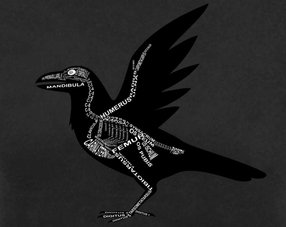Raven Skeleton: Every crow bone in its medical, Latin name. For a veterinarian, gothic and vet student - Word Anatomy