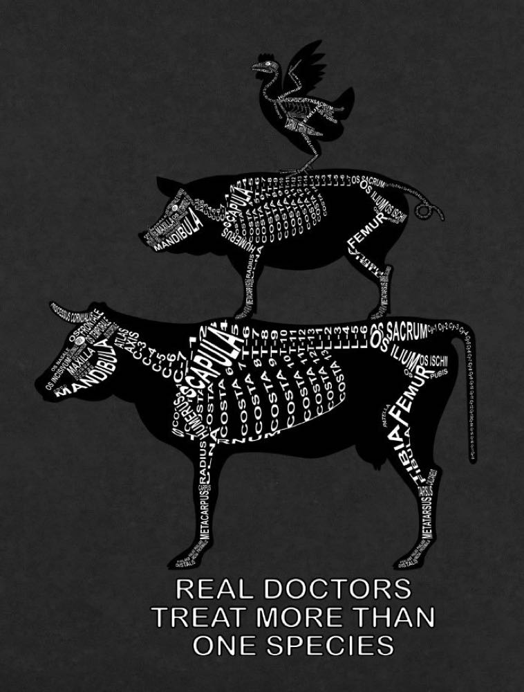 Real doctors treat more than one species: Every bone of the skeleton in its medical, Latin name. For a veterinarian and vet student - Word Anatomy