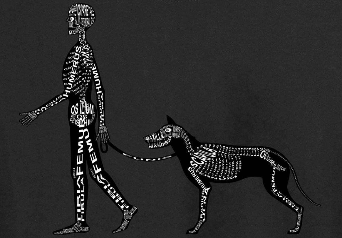 Skeleton of Human and Dog: Every bone is shown in its medical, Latin name. For a doctor and vet student - Word Anatomy